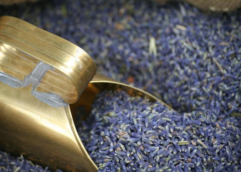 lavender-537851_1920.jpg